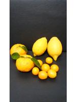柑橘類たくさんいただきました!!